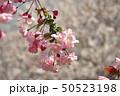 ピンク 盆栽 植物の写真 50523198
