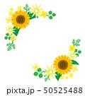 ひまわり 向日葵 花のイラスト 50525488