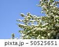 花 青空 青色の写真 50525651