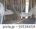 オーストラリアのアルパカシープ 50536458