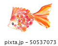 色鮮やか金魚3 50537073