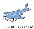 ジンベエザメ Whaleshark 50537138