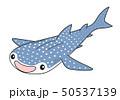 ジンベエザメ Whaleshark 50537139