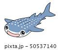 ジンベエザメ Whaleshark 50537140