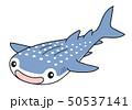 ジンベエザメ Whaleshark 50537141