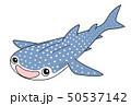 ジンベエザメ Whaleshark 50537142