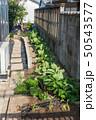 家庭菜園 50543577