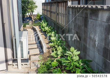 家庭菜園 50543578