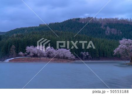 新潟県津南町の中子の桜と朝靄 50553188