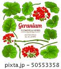 geranium elements set 50553358