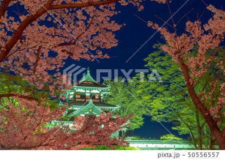 日本三大夜桜の高田城址公園の夜桜のライトアップ 50556557