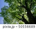 森 林 森林の写真 50556689