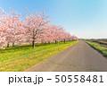 花 フラワー 景色の写真 50558481