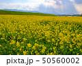 菜の花 畑  50560002