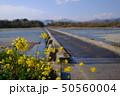 菜の花 畑  50560004