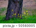 菜の花 樹木  50560005