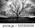 大樹 50560006