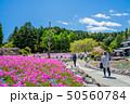 芝桜 花のじゅうたん 花畑の写真 50560784