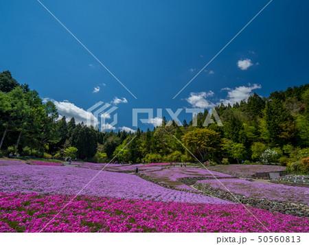 三田市の芝桜園 花のじゅうたん 50560813