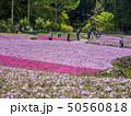 芝桜 花のじゅうたん 花畑の写真 50560818