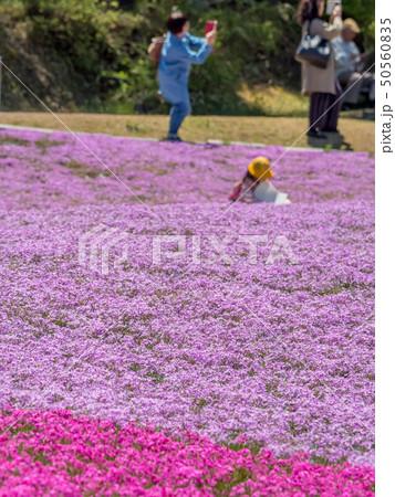 三田市の芝桜園 花のじゅうたん 50560835