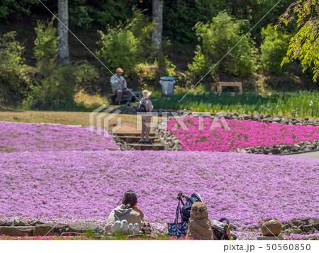 三田市の芝桜園 花のじゅうたん 50560850