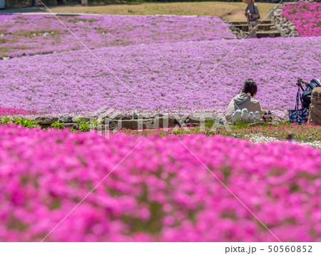三田市の芝桜園 花のじゅうたん 50560852