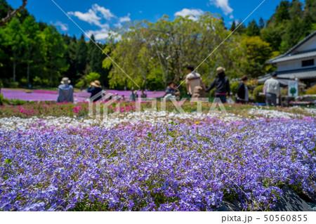 三田市の芝桜園 花のじゅうたん 50560855