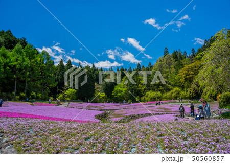 三田市の芝桜園 花のじゅうたん 50560857