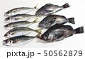鮮魚 50562879