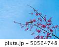 桜と鳥 50564748