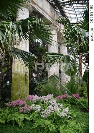ベルギー ラーケン王室 ガラスの温室(王宮)内 50565499