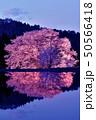 群馬県片品村の天王桜ライトアップ 50566418
