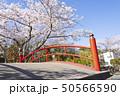 橋 涌谷 城山公園 桜 春 50566590
