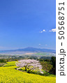 白木峰高原の桜 50568751