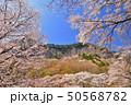 屏風岩公苑の桜 50568782