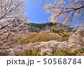 屏風岩公苑の桜 50568784