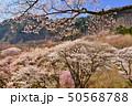 屏風岩公苑の桜 50568788