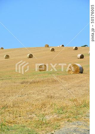 丘の上に広がる麦ロール 50576005