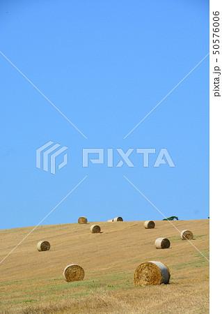 丘の上に広がる麦ロール 50576006