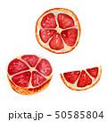 シトラス 柑橘 柑橘系のイラスト 50585804