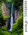 震動の滝 新緑 雄滝 50588099