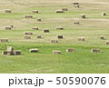 Straw bales on the green field 50590076