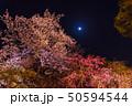 舞鶴公園の夜桜 50594544