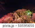 舞鶴公園多聞櫓近くの枝垂桜 夜桜 50595650