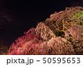 舞鶴公園多聞櫓近くの枝垂桜 夜桜 50595653