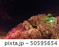 舞鶴公園多聞櫓近くの枝垂桜 夜桜 50595654