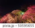 舞鶴公園多聞櫓近くの枝垂桜 夜桜 50595655