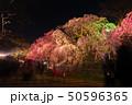 舞鶴公園多聞櫓近くの枝垂桜 夜桜 引き構図 桜以外暗め 50596365