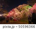 舞鶴公園多聞櫓近くの枝垂桜 夜桜 引き構図 50596366